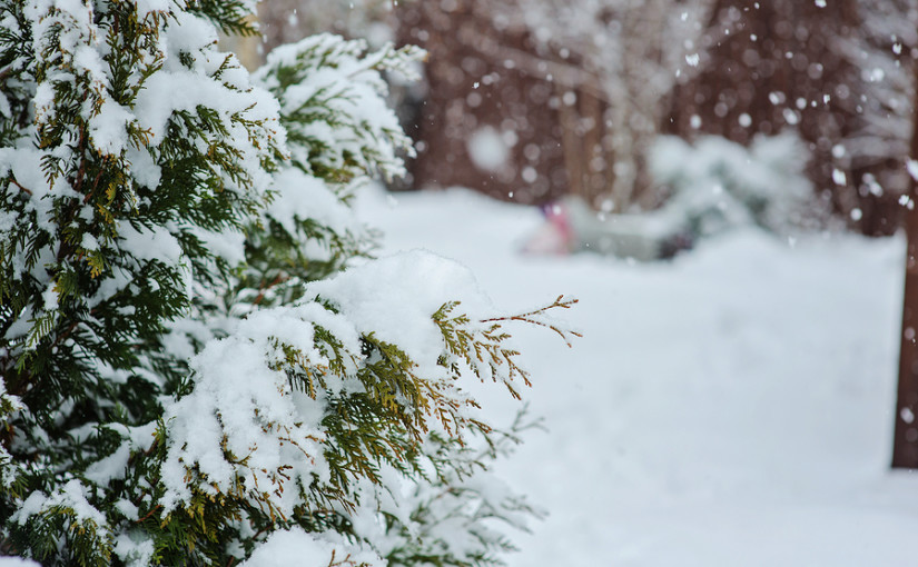 Clearing out your garden for winter