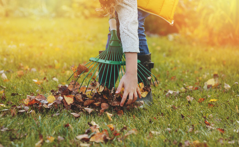 Garden waste: prepping the garden for autumn