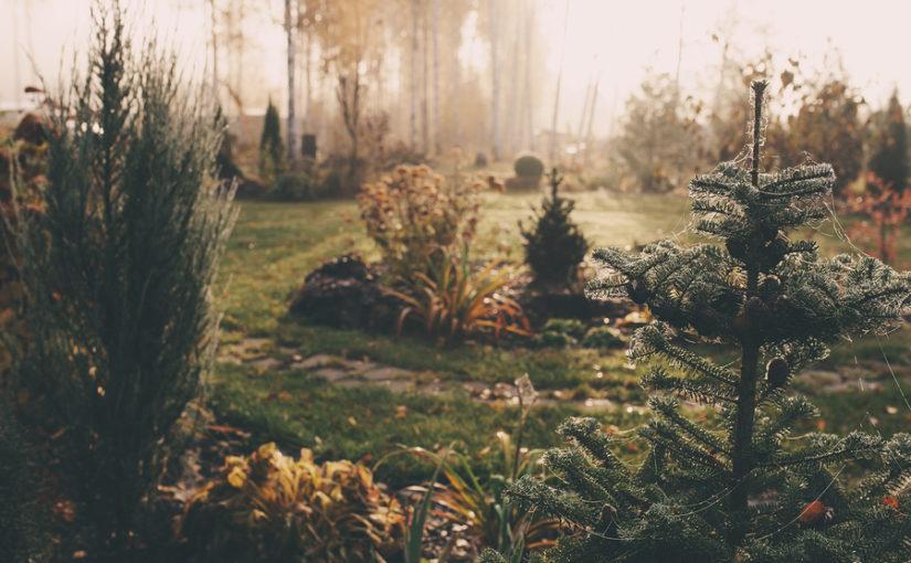 Garden planning for January