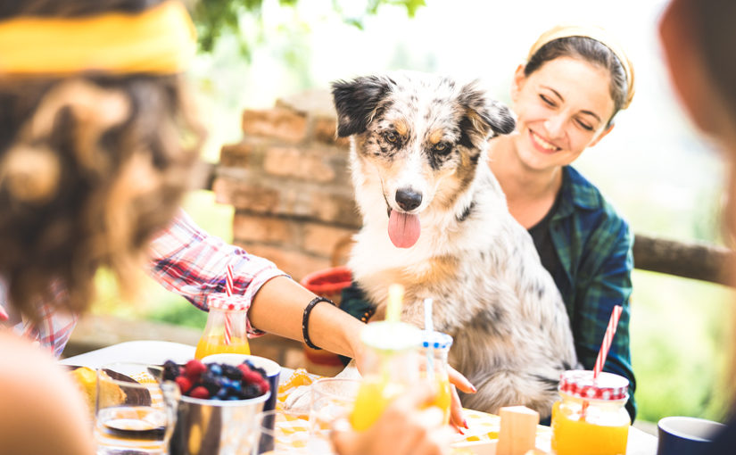 A picture of a group of friends and a dog enjoying a garden party together.